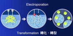 Transformation 轉化、轉型『化工字典』台灣儀器網 www.tw17.com.tw