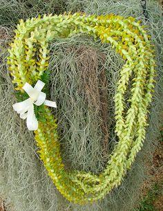 Pakalana, my favorite flower lei - mine too! Flower Lei, Flower Garlands, Flower Headbands, All About Hawaii, Hawaiian Crafts, Hawaiian Flowers, Hawaiian Leis, Graduation Leis, Grape Vines