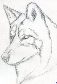 how to draw a wolf head, mexican wolf step 3 drawings - wolf sketch Creative Pencil Drawings, Realistic Animal Drawings, Pencil Drawing Tutorials, Cute Easy Drawings, Cute Animal Drawings, Pencil Art Drawings, Cool Art Drawings, Art Drawings Sketches, Drawing Animals