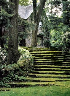 I don't know where this is, but it's like a fairy cottage in the woods! Love the mossy steps.