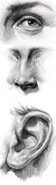Dessin de parties d'un visage à la mine de plomb