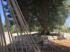 #www.fiancoafianco.eu Puglia Vacation