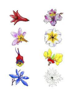 Flores endémicas de Chile. Desierto de Atacama.