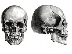 Learn: Skull (by mb07709) - Memorize.com - Remember and Understand