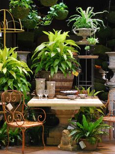 This site features an array of indoor tropicals used in containers outside in the shade. Beautiful compositions.