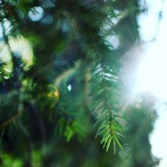 KOMOREBI (n) sunlight filtering through trees.  #japanese #inspiration #word #nature #tree #komorebi #tree #sunlight #beauty #forest #green #colorofmylife #pure #love #justbreathe #reboot #photography #minimal #love #staypositive