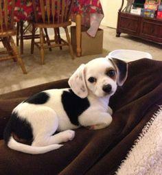 10 chiens croisés qui vont vous faire fondre tellement ils sont mignons !