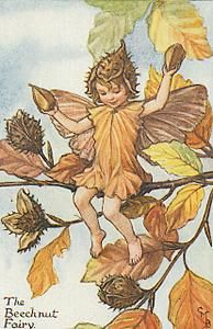 Beechnut Flower Fairy