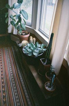 Bohemian Homes: Cacti