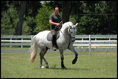 Andalusian stallion  photo clouds mystique