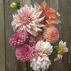 Delighting in Dahlias – The Buzz Blog || Diane James Home