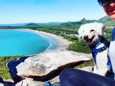 Lewis enjoying the view from the mountain top of Halliday Bay, after a cheeky game of golf 😎⛳ Dog Travel, Offroad, Mountain, Golf, Cute, Animals, Instagram, Off Road, Animaux