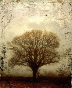 Morning Tree   Ian MacCulloch http://www.ianmacculloch.com/
