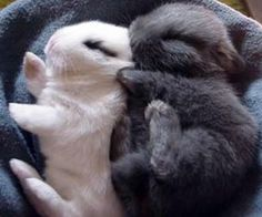 Sleeping bunnies are the cuuuuutest!