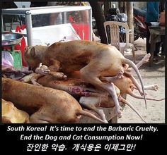 Animal welfare and rights in South Korea