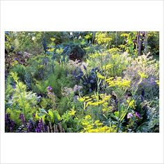 Potager with mixed planting