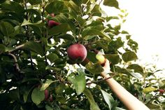 Apple Picking at Pine Farms Orchard #Fall #NewMoments #ApplePicking #Roadtrip #Adventure