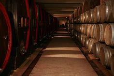 Tikveš Winery, Macedonia
