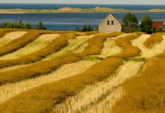 Springbrook Farm, Prince Edward Island.  We passed this place maybe 20 times on our first visit to PEI in 2012.  My absolute favourite view of the island.  So love this place!