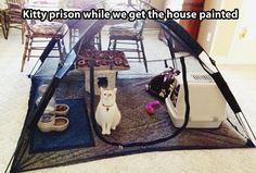 Kitty prison… great idea if you need to keep them safely contained and have the room. Camping for cats?