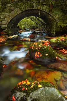 Autumn Bridge ~ Inistioge, County, Kilkenny Ireland - This is so beautiful and peaceful. Beautiful World, Beautiful Places, Ouvrages D'art, Dame Nature, Belle Photo, Beautiful Landscapes, Wonders Of The World, Beautiful Pictures, Nature Pictures