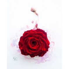 Limzy (@lovelimzy) | Rouge II, made of a preserved red rose . #instaartmovement | Intagme - The Best Instagram Widget