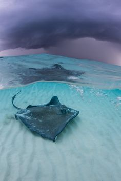 10bullets:  Stormy Skies over Stingray City (by andy_deitsch)