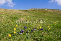 #Field Of #Flowers On The #Way To #Top of Mt. #Mirnock 2.110m @depositphotos #depositphotos #@carinzia #ktr15 #nature #landscape #carinthia #austria #summer #season #spring #outdoor #hiking #holidays #vacation #travel #leisure #sightseeing #stock #photo #portfolio #download #hires #royaltyfree