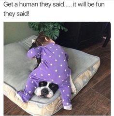 Dog Memes – 30 Pics