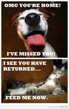 Funny because it's true. Exactly what I come home to every night.