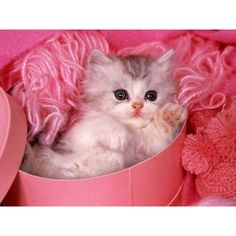 Cats ❤ liked on Polyvore featuring animals, cats, backgrounds, pets and pictures