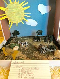 Biome Grassland project 4th grade.