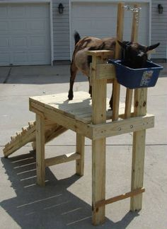 This is what I need to keep the goats contained when I trim they're hooves since they are WAY to heavy to pick up anymore. :)