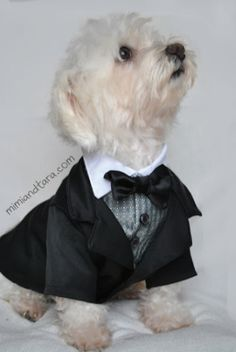 Suit jacket dog