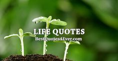Collection of the best Life quotes by famous authors, inspiring leaders, and interesting fictional characters on Best Quotes Ever.