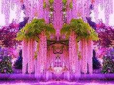 Kawachi Fuji {Wisteria} Gardens Japan {|} Wisteria Tunnel is one of the most striking sights of Japan and definitely one of the most beautiful places on Earth. If you go into the tunnel, you won't stop half way, and will definitely want to go to the end!
