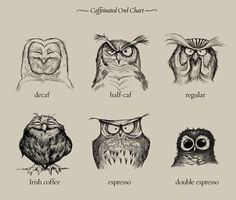 We're Only the Irish Coffee Owl Between 9 and 5