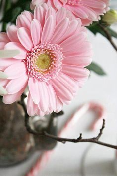 ❥ pink gerbera daisy