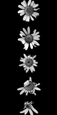 imagenes tumblr blanco y negro - Buscar con Google