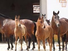 Cavalos de Alter do Chão
