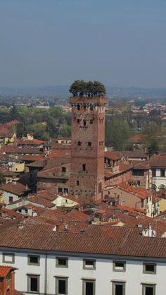 World's Beautiful Landscapes.: Guinigi Tower Crowned With Oak Trees