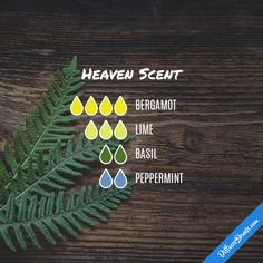 Heaven Scent - Essential Oil Diffuser Blend