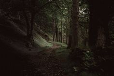 A path through a dark evergreen forest near Loch Maree Image Nature, Nature Images, Nature Pictures, Beautiful Pictures, Inverness, Outlander, Monstre Du Loch Ness, Chutes Victoria, Port De Soller