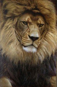 Unbelievable lion