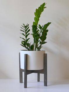 Zanzibar plant | Stand Proud pot [if I could keep things alive]