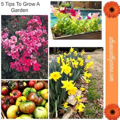 5 Tips for Growing A Garden #1 - AT HOME WITH JEMMA