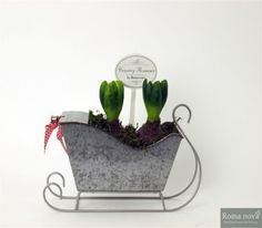 Hyacinth in sledge silver