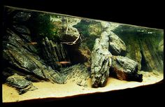 """12L tank! Good """"line-of-sight"""" interruptions for cichlids, maybe smoother rocks would look better."""