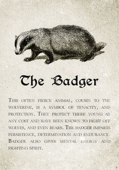 Hufflepuff: The Badger. Pottermore Sorting: Sorting Hat Analysis and Meta Harry Potter Houses, Hogwarts Houses, Harry Potter World, Hogwarts Mystery, Honey Badger, The Badger, Hufflepuff Pride, Badass, Animales