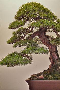 European bonsaï show, Saulieu , France